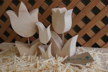 Frühjahrsbote Tulpengruppe